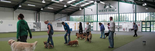 Specialist Dog Training